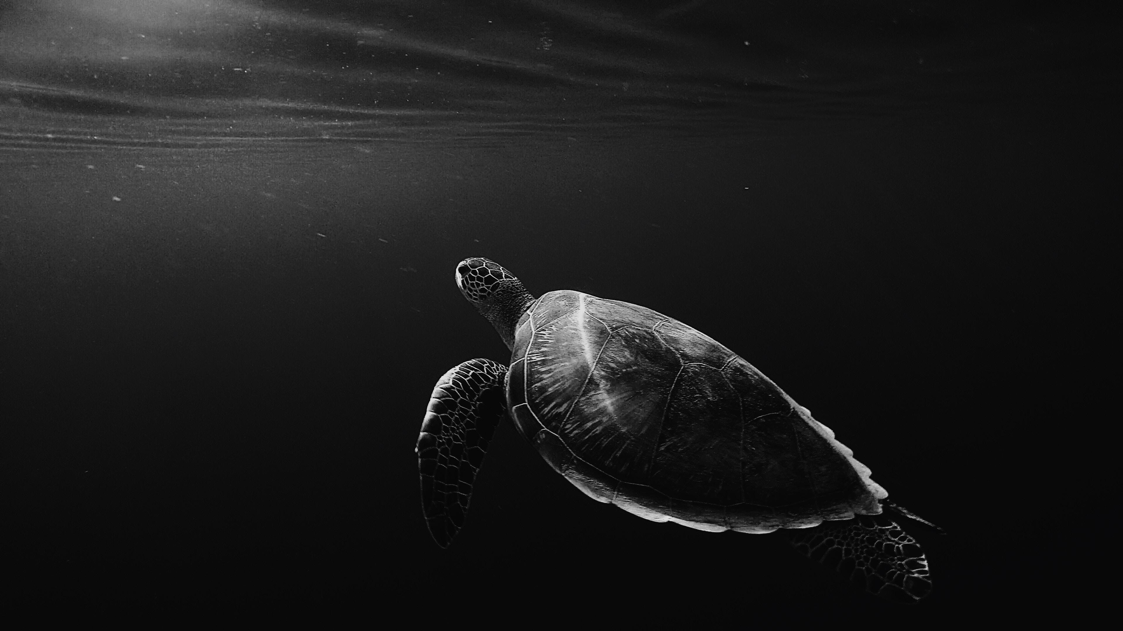 Meeresschildkröte auf unsplash.com
